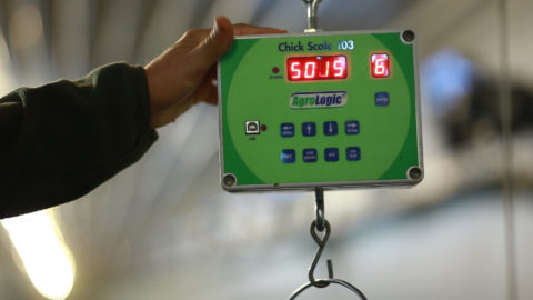 Feed Scale for poultry farms